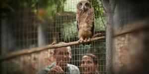 1000-owl-zoo