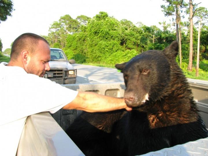 bear15