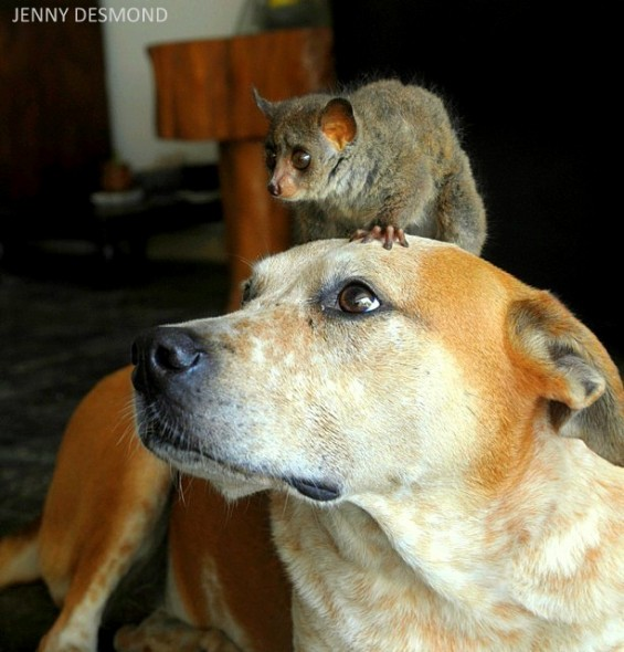 foster-dog-and-rodent