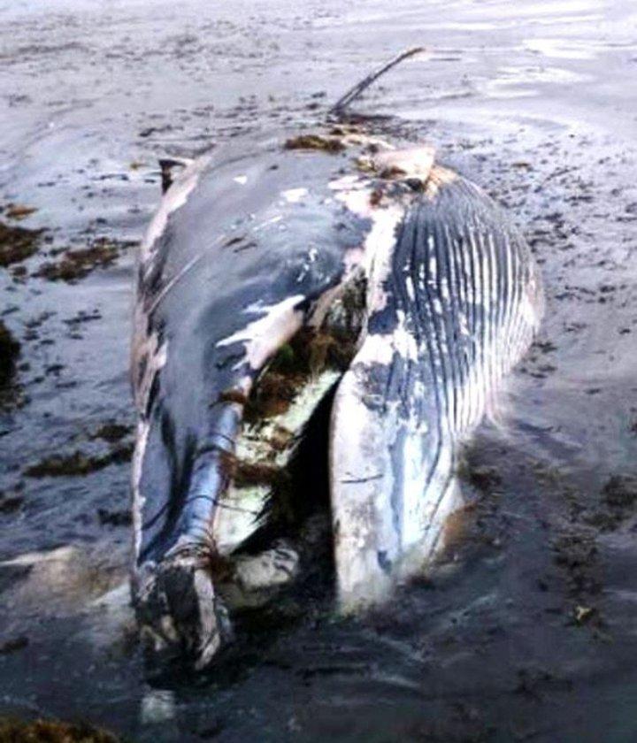 beached-whale-1.jpg