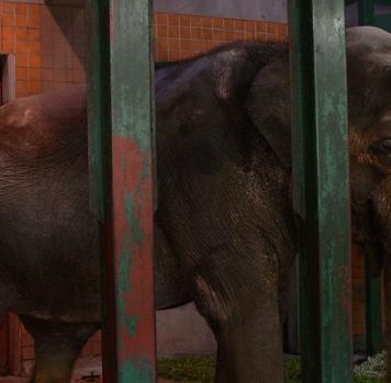 hanako-the-elephant