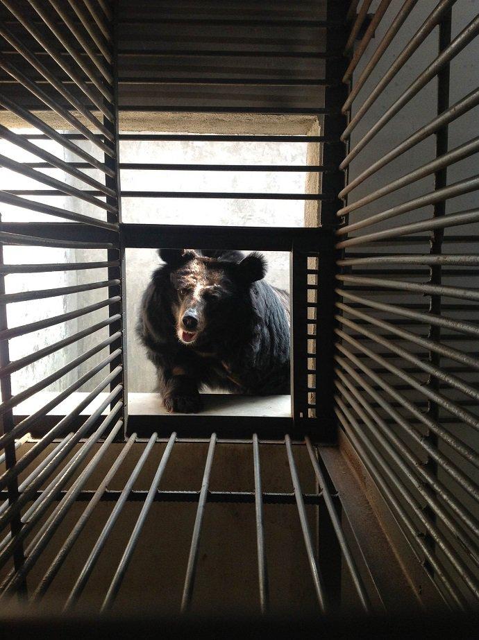 Teresa-den-cage-door.jpg