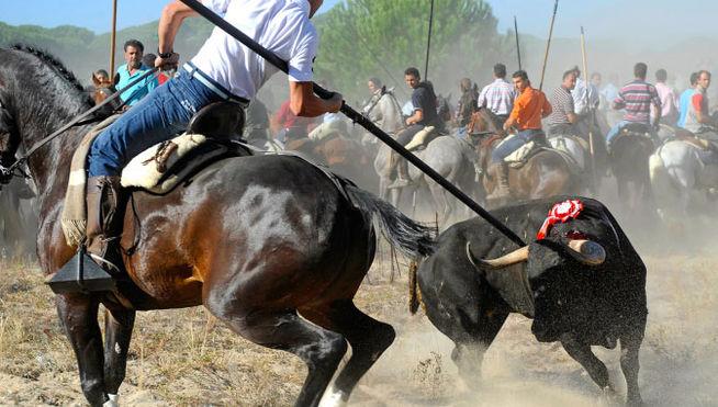 Toro_de_la_Vega-Tordesillas_MDSIMA20160519_0271_21