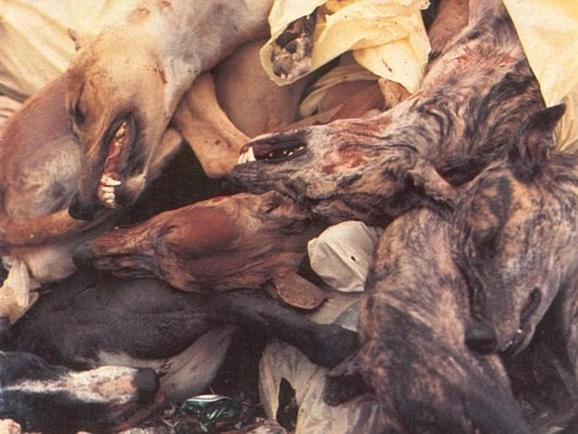 2644128600000578-2976602-Stomach_churning_images_are_published_by_animal_protection_group-m-28_1425421092821