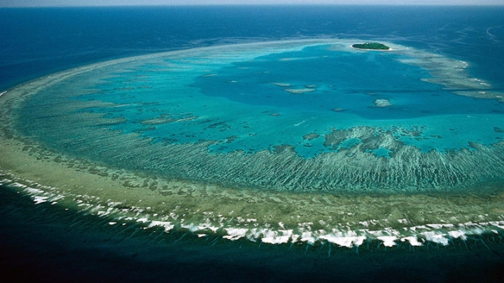 Great-Barrier-Reef-Coral-Bleaching-Found-to-be-Worst-in-its-History.jpg