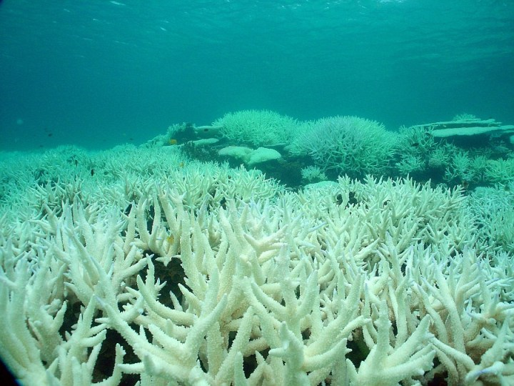 great_barrier_reef_bleaching.jpg