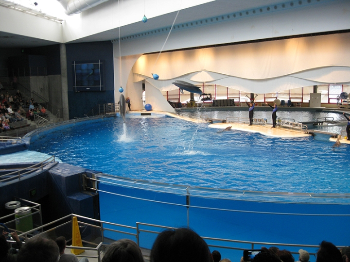 National-Aquarium-Dolphin-Show.jpg