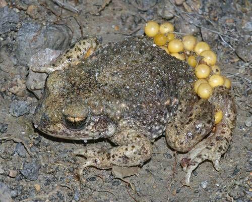 toad_2.jpg.638x0_q80_crop-smart