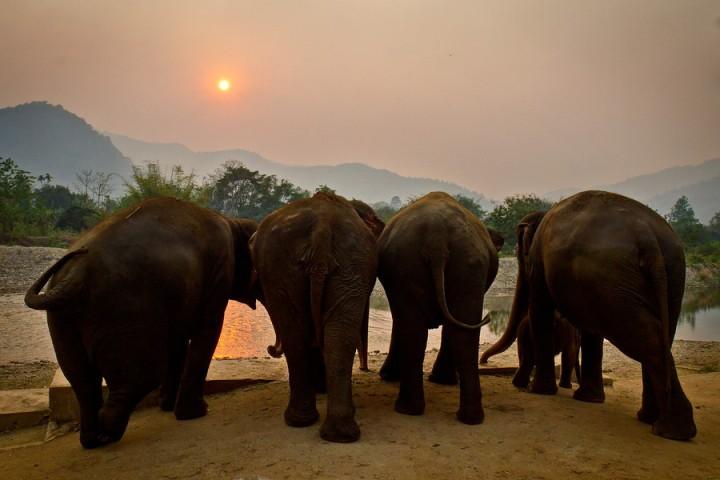 elephant-asian-sunset-900x900