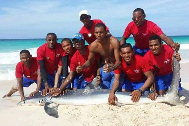 Shark-dies-after-a-group-of-tourists-drag-it-from-the-water-to-take-photos