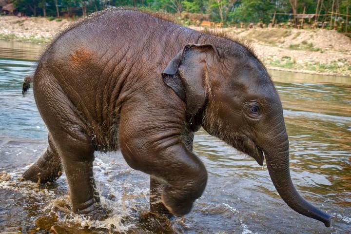 slonik6.jpg