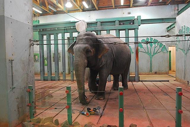valleyzooalberta2008-zoocheck-elephant