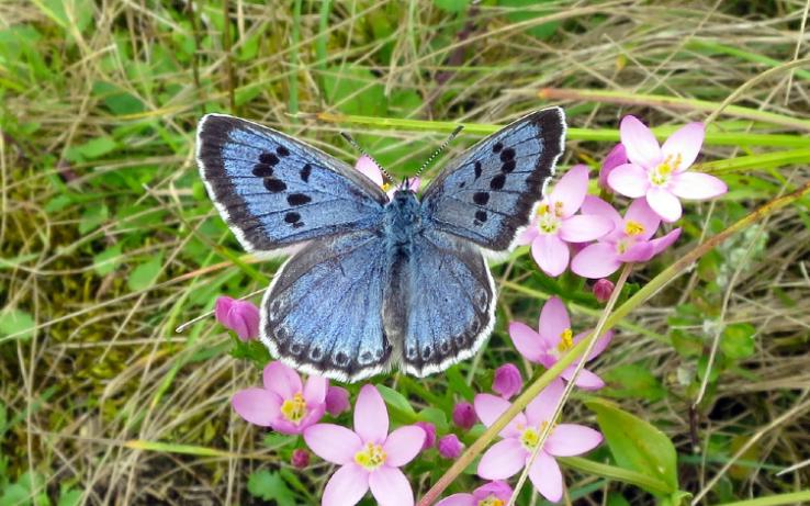 butterfly-xlarge_transcq3kdrbzurkzwjku6myxmwyn7kf8sbnmoayslxhvjom