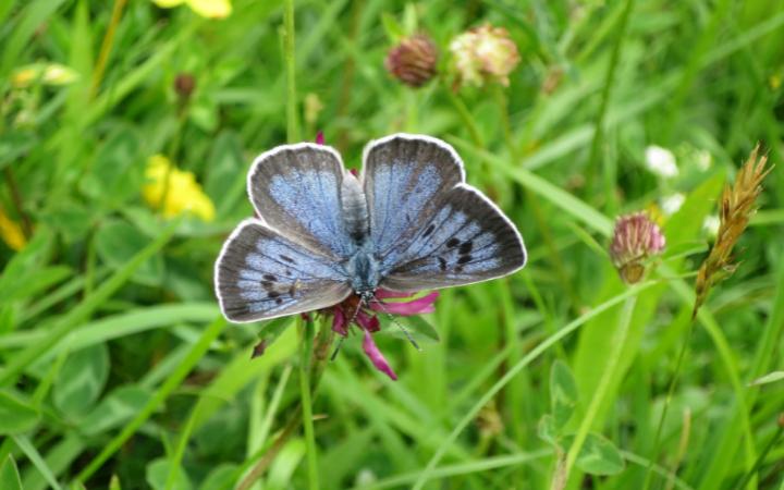 butterfly2-large_transefjwtfkcjozq6fci2t_7asf_1jrhgwzfj2e2dwa5njg