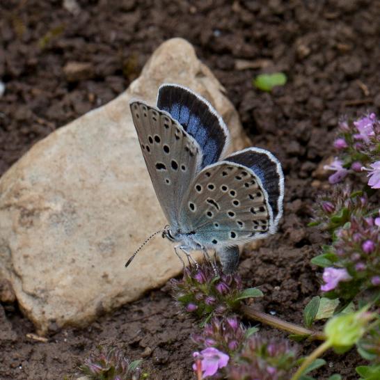 butterfly3-large_trans++NiE-Mrx1NkVNK-5leJTNILyHfuMYd0B-U1tqVGaNReE.PNG