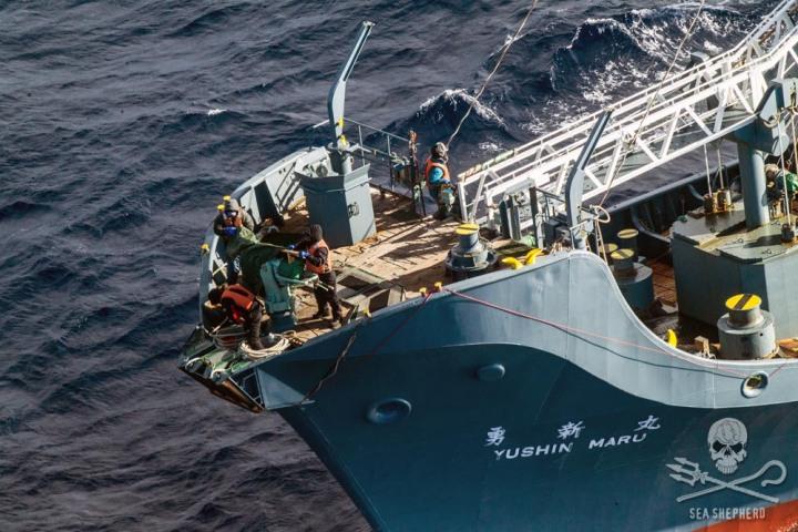 Posádka Nisshin Maru se pokouší zakrýt své harpuny.