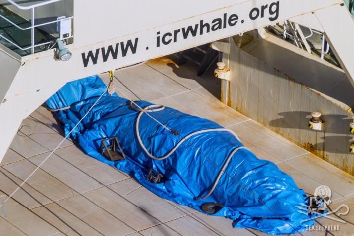 Japonští velrybáři se svůj zločin pokusil neobratně zakrýt.
