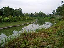 220px-Assam_028_yfb_edit