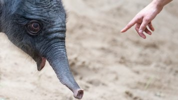 elefantenbaby336_v-vierspaltig