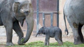 elefantenbaby344_v-vierspaltig